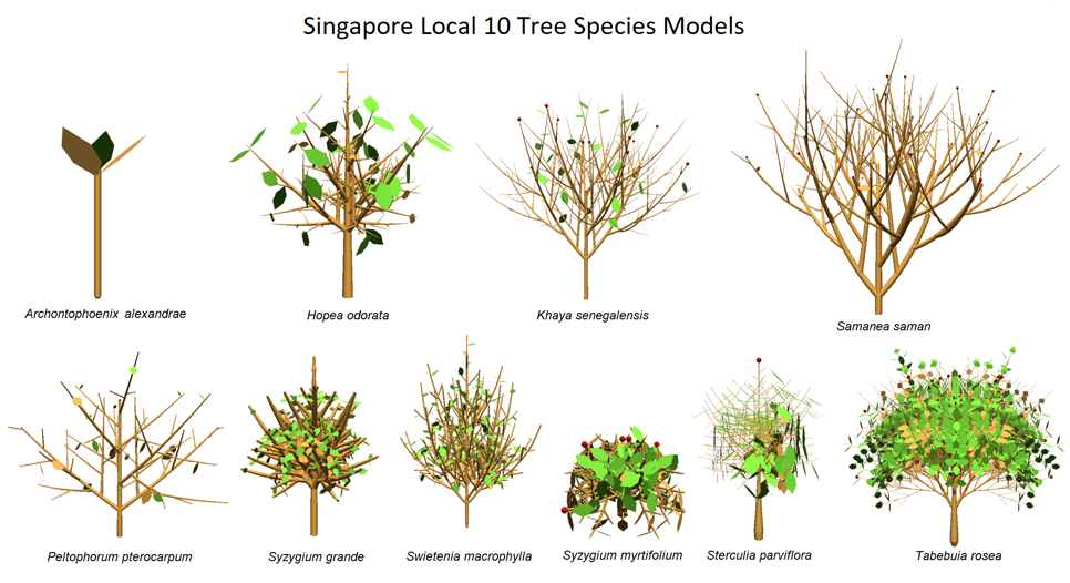 3D Tree Modelling: Local 10 tree species