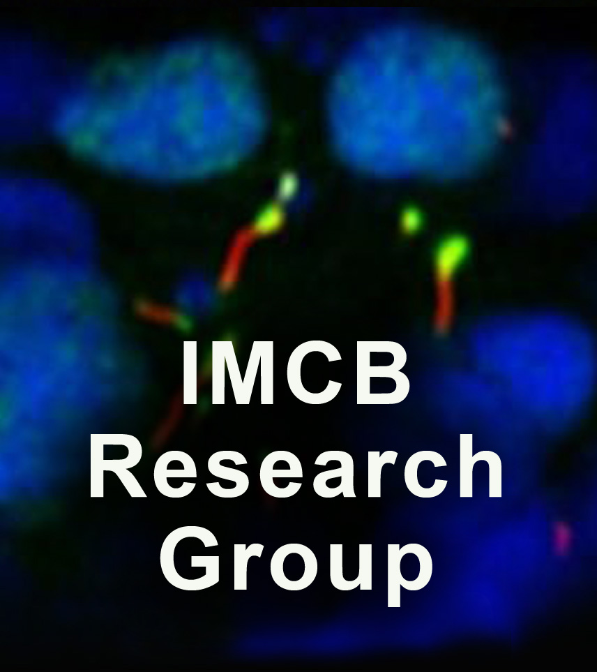 imcb Research group