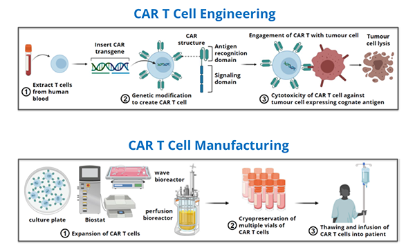 Immune Cell Engineering Research Focus