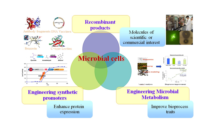 microbial_cells_pic