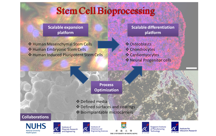 stem_cell2_pic